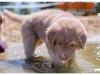 psi-ratownicy-czerwcowka-2015-papisie_0035