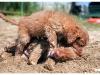 psi-ratownicy-czerwcowka-2015-papisie_0089
