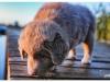 psi-ratownicy-czerwcowka-2015-papisie_0128
